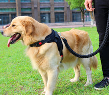 Braided Leash and Harness Combo