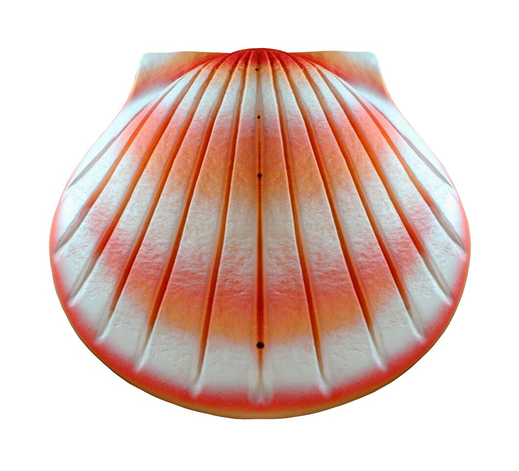 Biodegradable Shell Urn