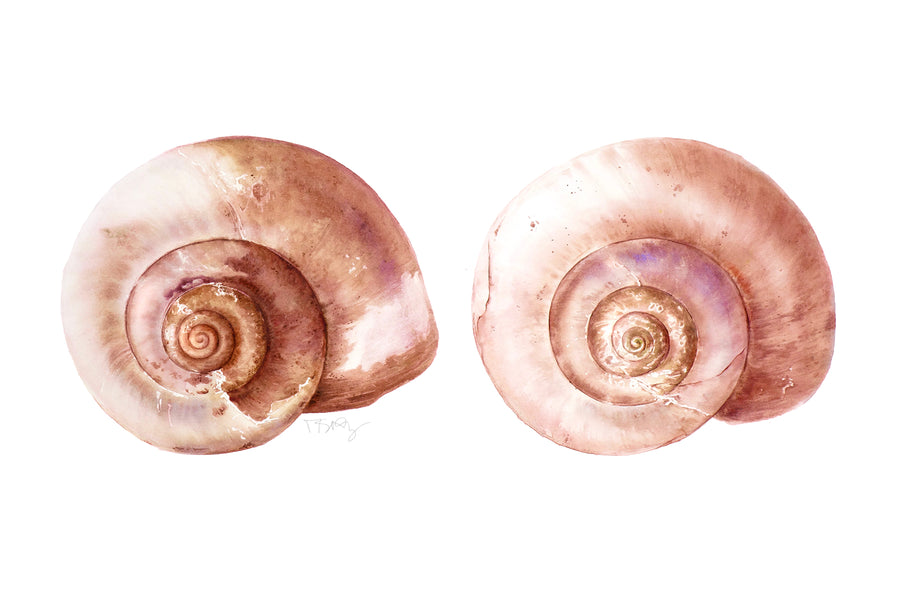 Beautifully painted pair of moon snail shells by artist Michelle SaintOnge as a tribute to breast cancer survivors.