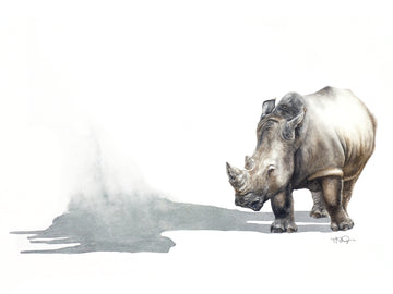A black rhino with his disappearing shadow painted in watercolour by Michelle SaintOnge.