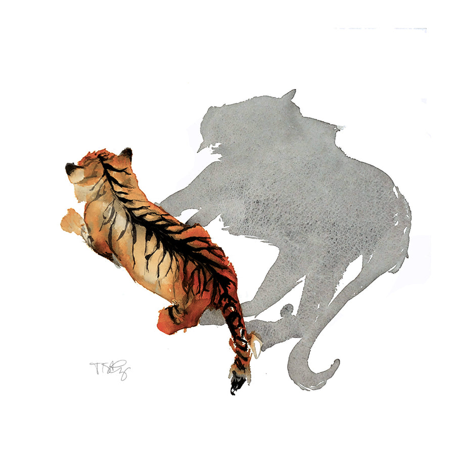 Top view of a Siberian tiger and it's shadow painted in watercolour by artist Michelle SaintOnge.