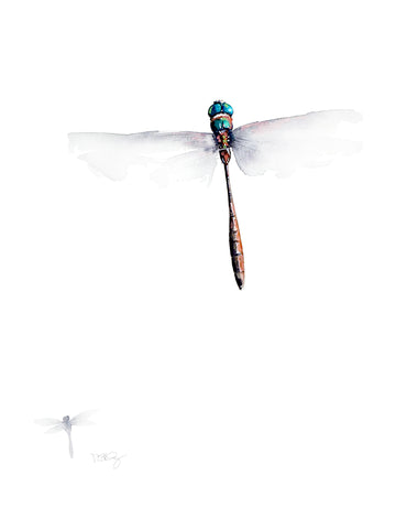 A hines dragonfly painted in watercolour by artist Michelle SaintOnge.