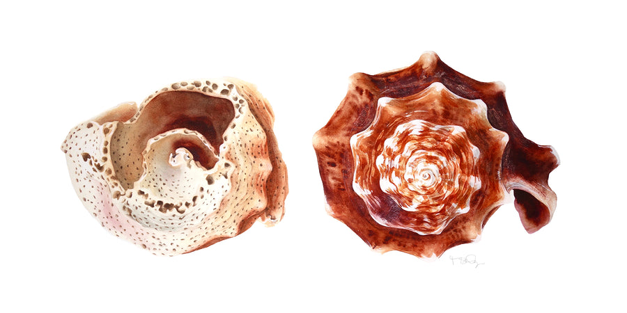 A pair of painted shells in watercolour  by artist Michelle SaintOnge. One broken and hollowed out.