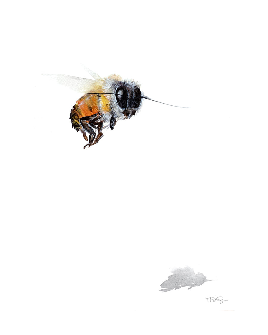 Watercolor painting of a lone bee flying along with it's shadow by artist Michelle SaintOnge.