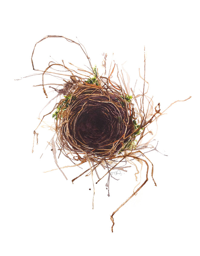 Amazing watercolour of a bird nest by artist Michelle SaintOnge.