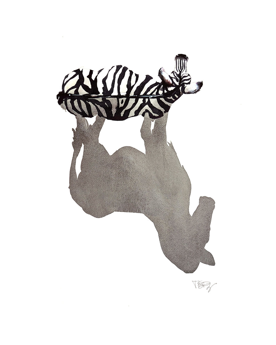 Top view of a zebra and it's shadow.