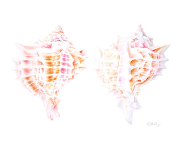 Two murex shells painting in watercolour by artist Michelle SaintOnge.