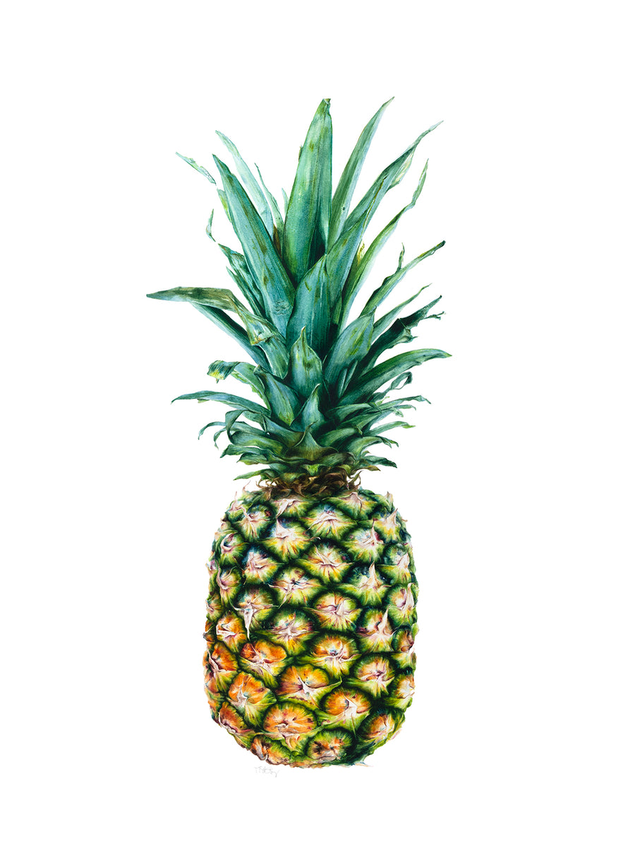 Watercolour painting of a pineapple.