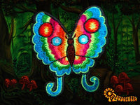 colourful butterfly patch small size beautiful