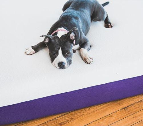 Need a miracle product to sleep better? The Polysleep mattress!