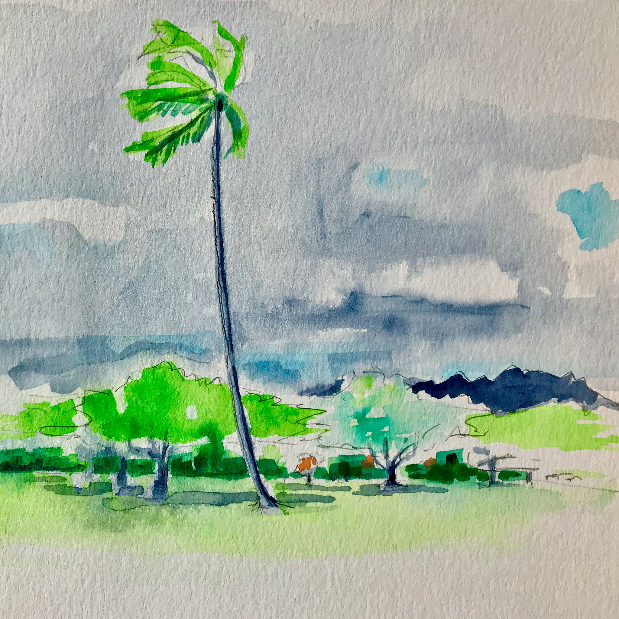 Kapiolani Park Palm Tree