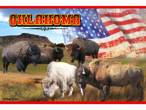 Buffalo/Flag Postcard