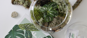 the urban botanist - terrarium workshops virtual workshops and vertical green walls canada ottawa ontario