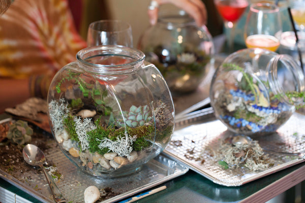 Build a terrarium at our Plant Night! The Urban Botanist helps you build a succulent and cacti terrarium, which is a great way to learn about succulent and cacti plant care!