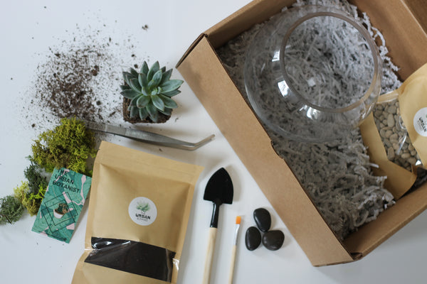 DIY Terrarium - Master Kit