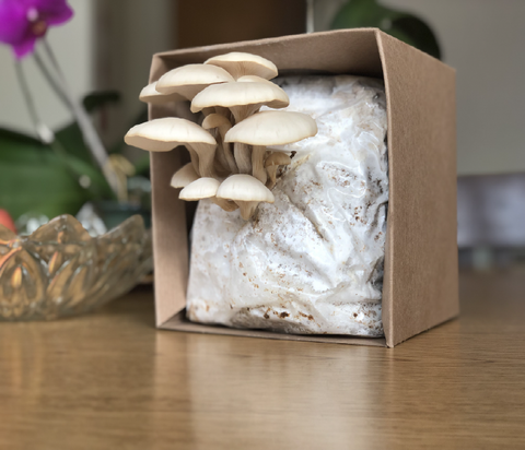 DIY Mushroom Growing Kit