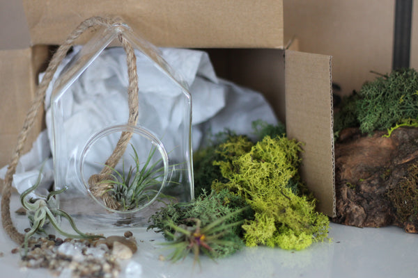DIY Terrarium Kit