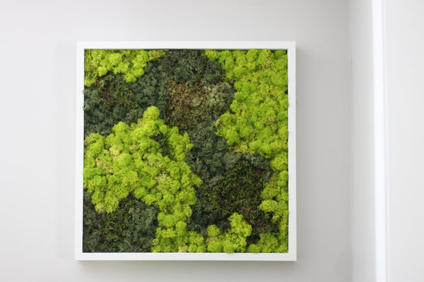 Moss Frame Workshop with Saje Westboro - March 29th 2020