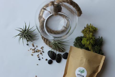 Air Plant Terrarium - Master Kit