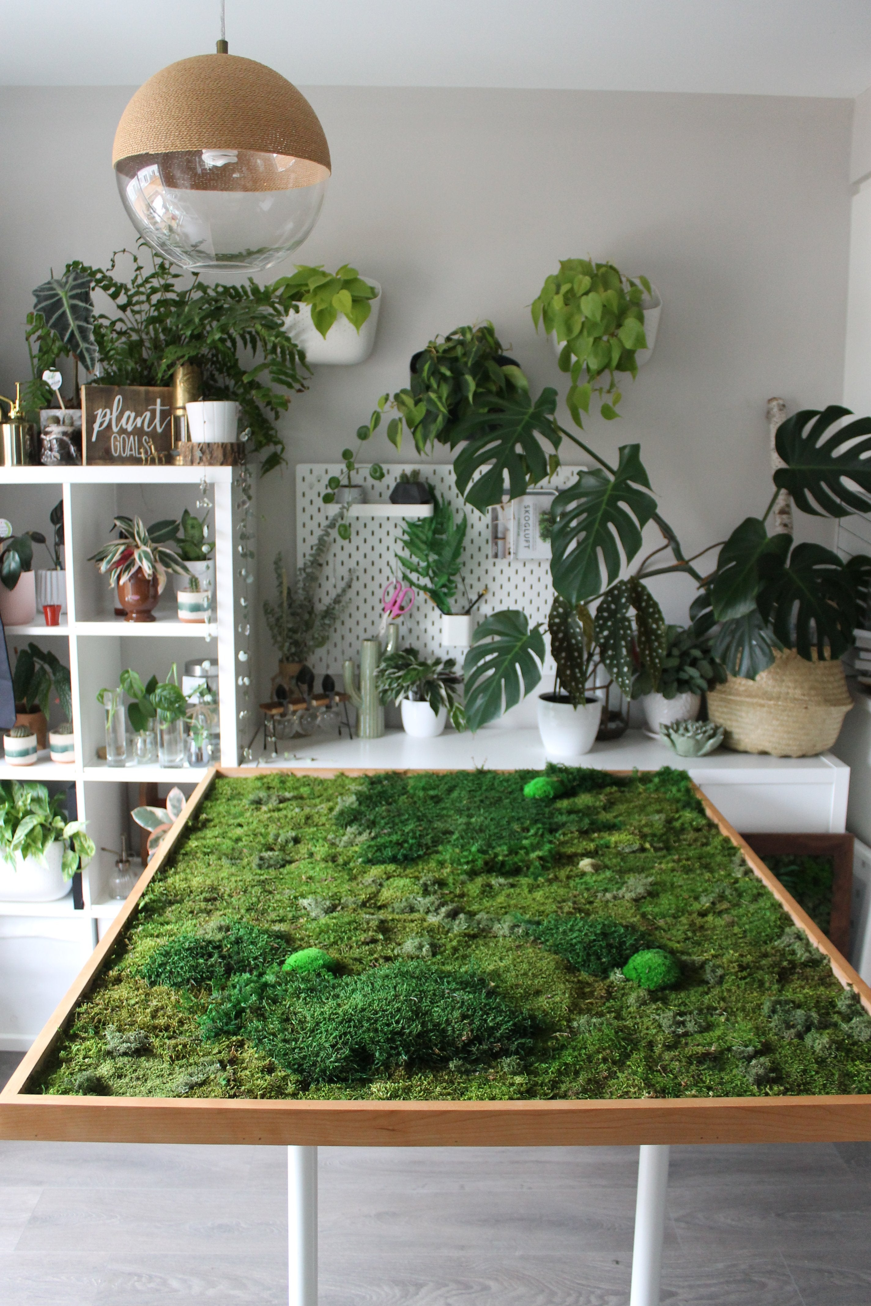 A custom mixed moss frame surrounded by plants