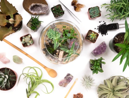 Terrarium and succulents laying on a white table