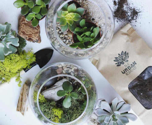 Terrarium and DIY kits sitting on a table