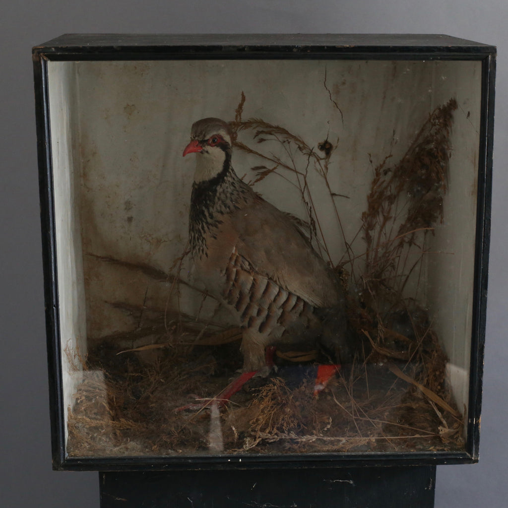 Taxidermy Bird in Box - Large