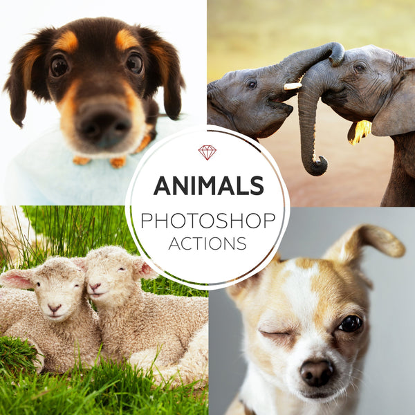 Animals - Photoshop Actions