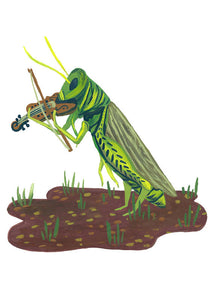Illustrated Print - Grasshopper