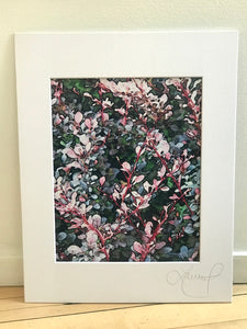 Pink Wild Flowers Abstract Print