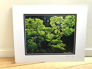 Crisp Neon Green Tree Foliage Abstract Print