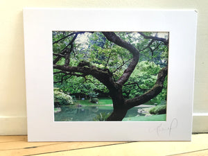 Large Tree Against A Stream Abstract Print