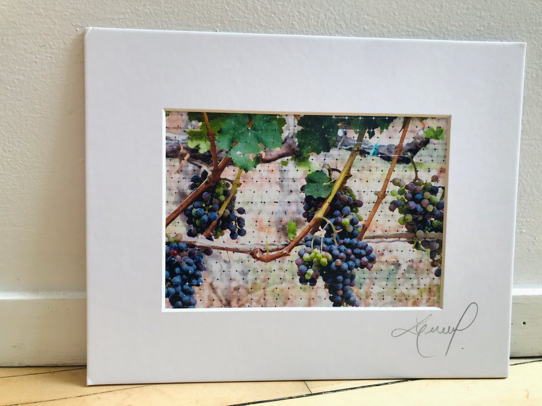Grapes on a Vine Print
