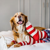 Christmas Dog Leg Warmers With Matching Human Socks!