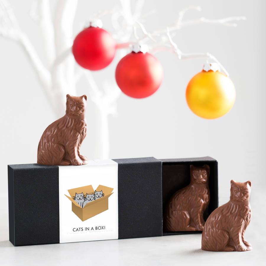 Chocolate Cats - In A Box!