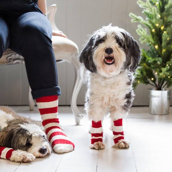 Dog Leg Warmers With Matching Human Socks!