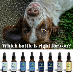 CBD, which product to use, best CBD for pets, CBD for pets, vet approved CBD, Colorado sun grown