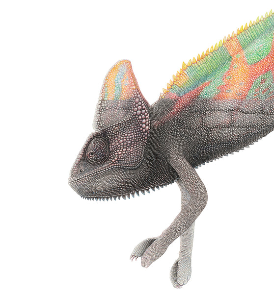 Drawing of a chameleon with half its body reflecting the pattern of a wall - wildlife artivism