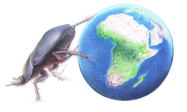 Drawing of a dung beetle pushing the earth