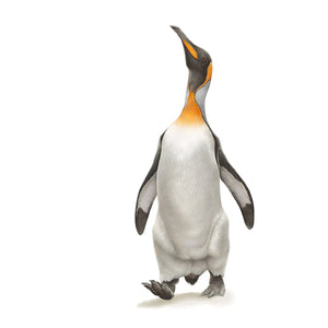 Drawing of a king penguin by wildlife artist Martin Aveling (mART)