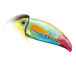 Drawing of a toucan by wildlife artist Martin Aveling (mART)