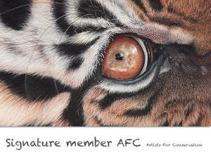 Martin Aveling AFC (Artists For Conservation) signature member. Drawing of a tiger eye with reflection