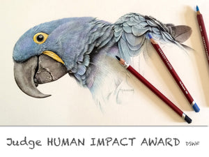 Martin Aveling JUDGE Human Impact Award - open to artists 17-25yrs. Drawing of a macaw with pastel pencils