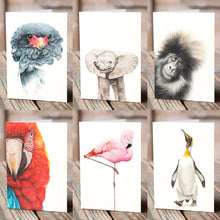 Greetings Card (6 x Flamingo) - Martin Aveling