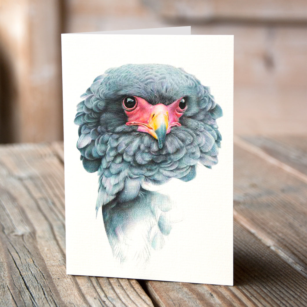 Greetings Card (6 x Bateleur Eagle) - Martin Aveling