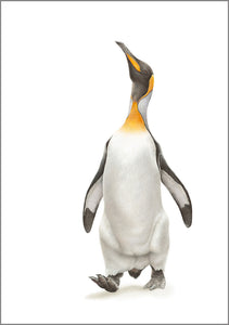 Limited Print (King Penguin) - Martin Aveling
