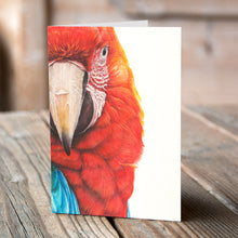 Greetings Card (6 x Macaw) - Martin Aveling