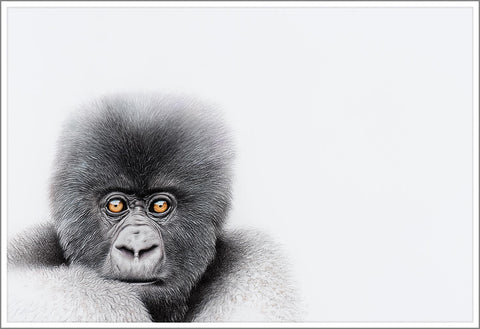 Limited Print (Mountain Gorilla 22) - Martin Aveling