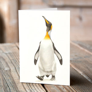 Greetings Card (6 x King Penguin) - Martin Aveling