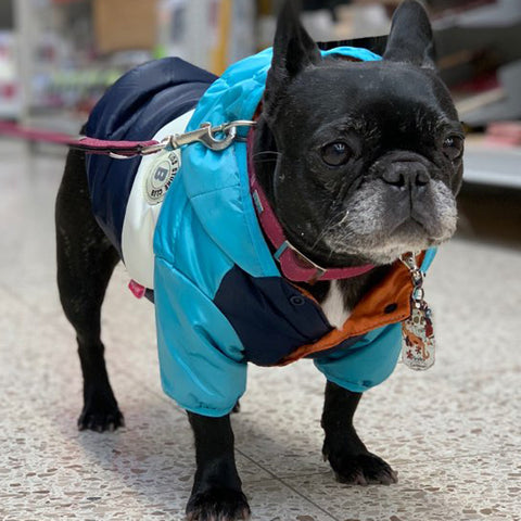 Waterproof Down Jacket Dog Clothes RI